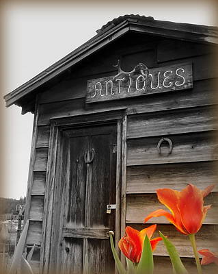 Photograph - Antiques And Tulips by Cindy Wright