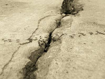 Floyd Smith Photograph - Ants And The Concrete Canyon by Floyd Smith