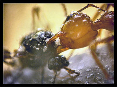 Photograph - Ants11 2008 by Glenn Bautista