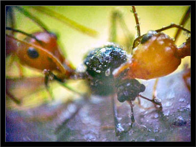 Photograph - Ants12 2008 by Glenn Bautista