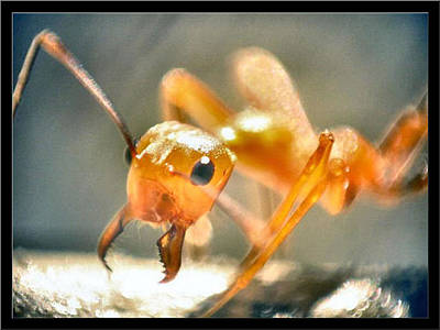 Photograph - Ants13 2008 by Glenn Bautista