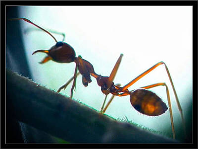 Photograph - Ants16 2008 by Glenn Bautista