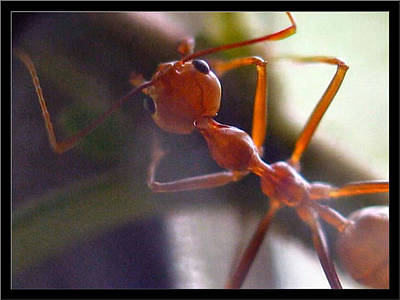 Photograph - Ants17 2008 by Glenn Bautista