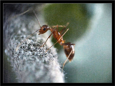 Photograph - Ants19 2008 by Glenn Bautista