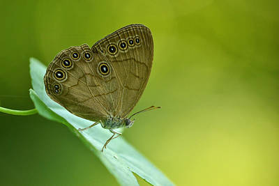 Print featuring the photograph Appalachian Brown by JD Grimes