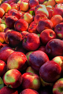 Photograph - Apple Harvest by Joann Vitali