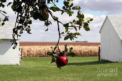 Photograph - Apple On The Tree  by Amelia Painter