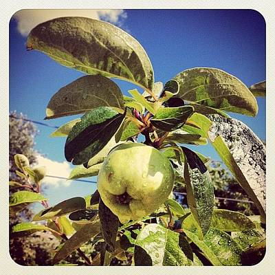 Healthy Wall Art - Photograph - Apple Or Pear by Sian Holt