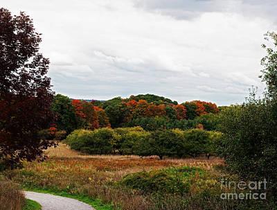 Photograph - Apple Orchard Gone Wild by Barbara McMahon