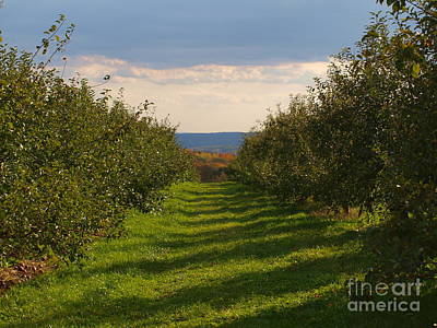 Apple Orchard Row Art Print by Frank Piercy