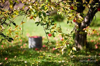 Apple Tree Print by Kati Molin