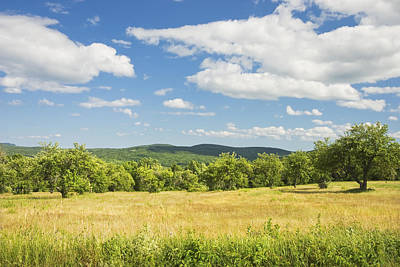 Apple Trees And Hay Field In Summer Maine Art Print