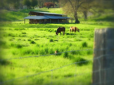 Photograph - Applegate Country Scene by Cindy Wright