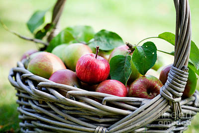 Photograph - Apples In Basket by Kati Finell