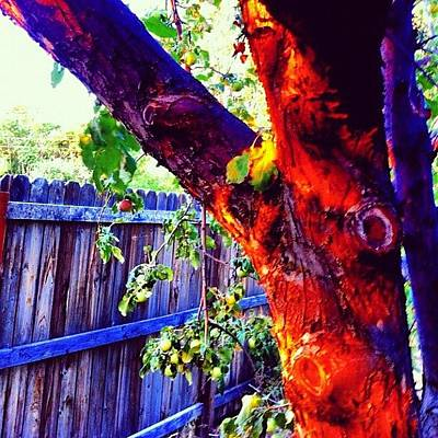 Color Contrast Wall Art - Photograph - #appletree #sunlight by Augie Stardust