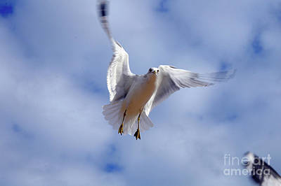 Art Print featuring the photograph Applying Brakes In Flight by Clayton Bruster