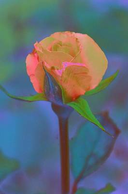 Photograph - Apricot Rose by Jan Amiss Photography