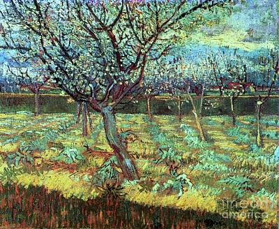 Apricot Trees In Blossom Art Print by Pg Reproductions