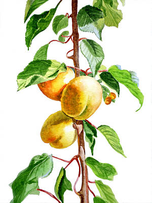 Light Yellow Painting - Apricots by Irina Sztukowski