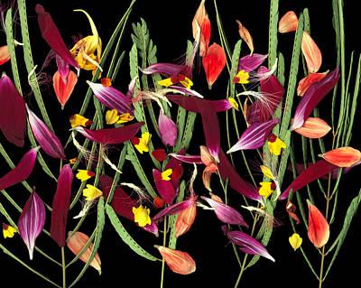 Flowers Photograph - April In Paris by Tim Fleming