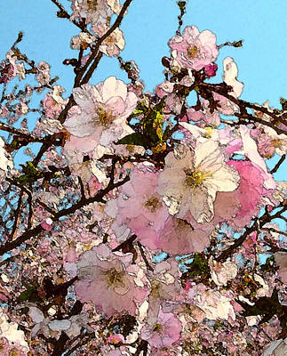 Photograph - April Morning With Cherry Blossoms by Katharine Birkett