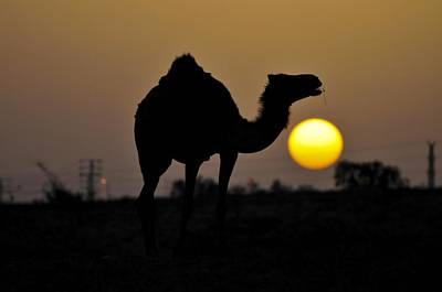 Arabian Camel Art Print by Photostock-israel
