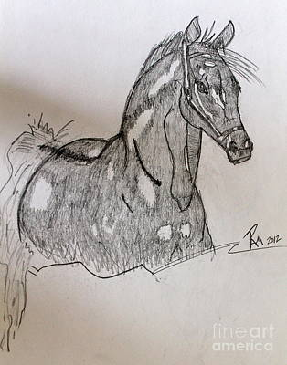Photograph - Arabian In Pencil by Pamela Walrath