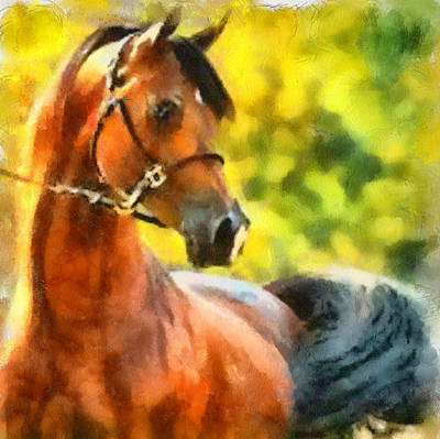 Arabian Stallion Art Print by Elizabeth Coats