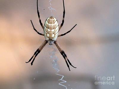 Photograph - Arachnid by Tammy Herrin