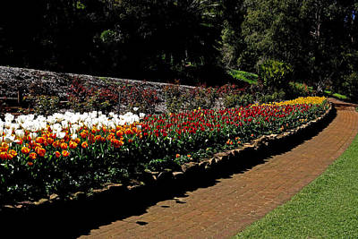Photograph - Araluen Botanic Gardens Tulips 30 by Tony Brown