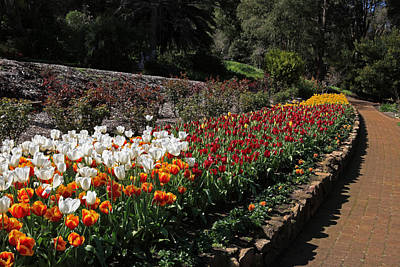 Photograph - Araluen Botanic Gardens Tulips 31 by Tony Brown