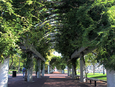 Photograph - Arbor In Boston by Kristin Elmquist