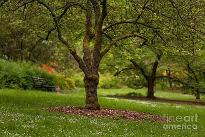 Rhodie Photograph - Arboretum Grove by Mike Reid
