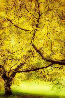 Michael Jackson - Arboretum Trees by Bobbie Climer