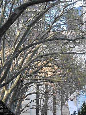 Arched Trees Art Print by Kimberly Perry
