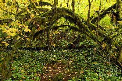 Photograph - Arches In The Rainforest by Adam Jewell