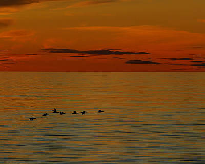 Photograph - Arctic Dusk by Tony Beck