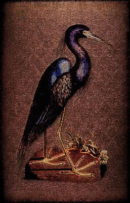 Ardea Caerulea Art Print by Li   van Saathoff