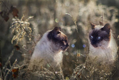 Abandoned Pets Digital Art - Are You Dreaming About Me - Siamese Feral Cat by Kathy Clark