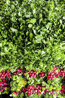 Y120831 Photograph - Ariel View Of Salad Leaves And Radishes by Liam Bailey