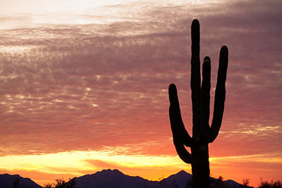Heaven Photograph - Arizona Saguaro Sunrise by James BO  Insogna