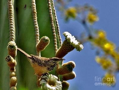 Marilyn Photograph - Arizona Springtime by Marilyn Smith
