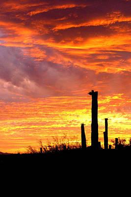 Photograph - Arizona Sunset And Saguaro by Dina Calvarese