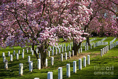 Photograph - Arlington Cherry Trees by Brian Jannsen