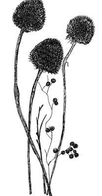Dead Heads Drawing - Arrangement by Elizabeth Thorstenson