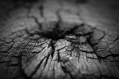 Photograph - Study Of Decay In Wood by Vintage Pix