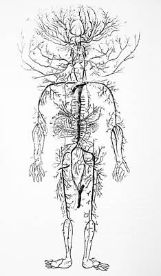 Arterial System, 18th Century Art Print by