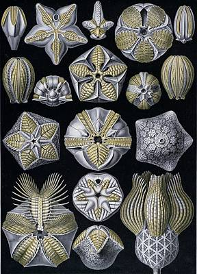 Of Nature Painting - Artforms Of Nature by Ernst Haeckel