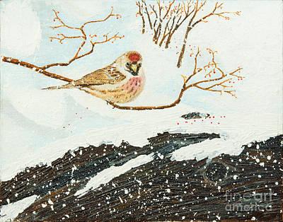 Artic Redpoll Art Print