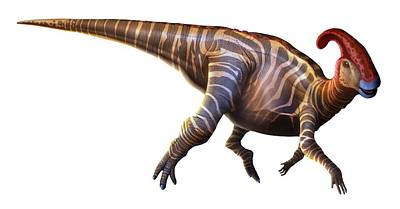 Artwork Of A Parasaurolophus Dinosaur Art Print by Mark Garlick
